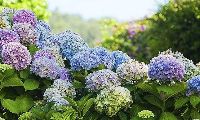 flores-inverno-capa_1