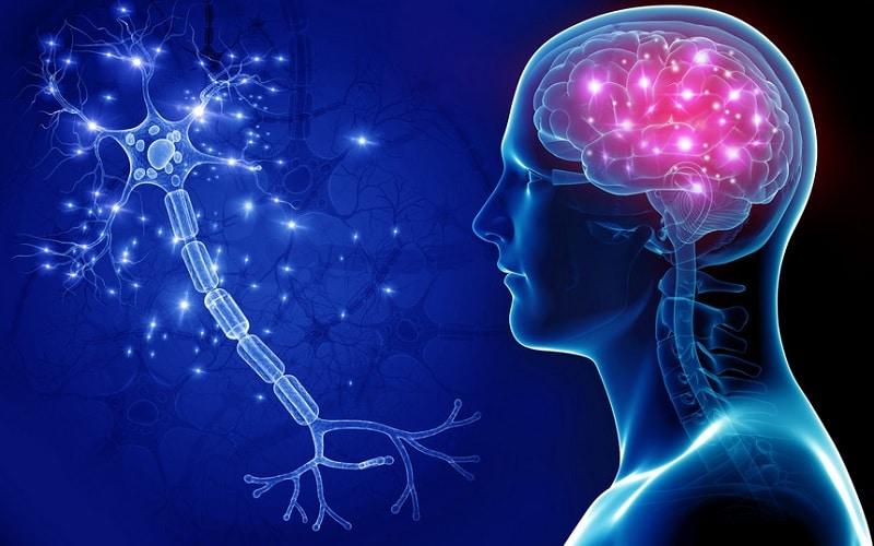 cérebro -consciencia